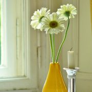 Blüte Gerbera