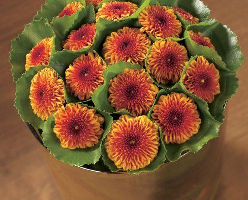 Chrysanthemen in warmem, herbstlichen Orange