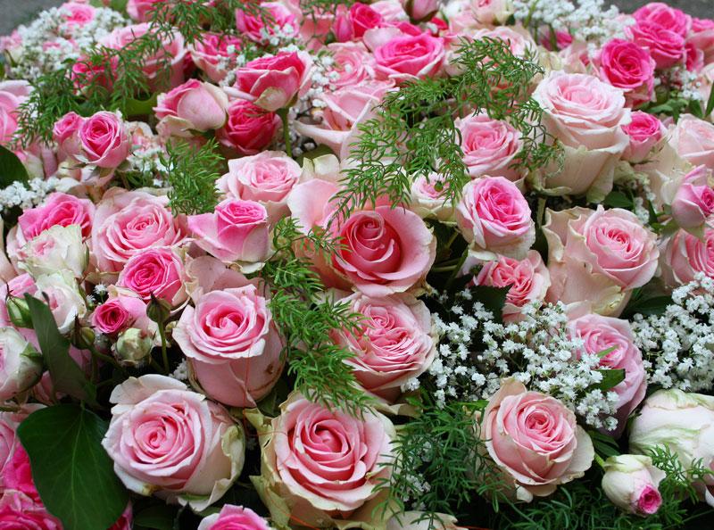 rosa Rosen und Schleierkraut