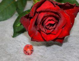 Kräftige rote Rose 1m lang