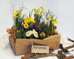 Eine Holzkiste in Packpapier mit Frühlingsblumen im Topf mit Perlhyazinthen, Primeln Narzissen