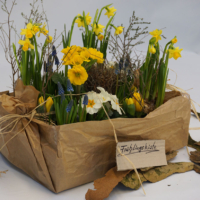 Frühlingsblumen in der Kiste: kleine und hohe langstielige Primeln sind dabei