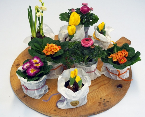 Palette der Frühlingsblumen mit Tulpe, Ranunkel, Narzisse und Primel
