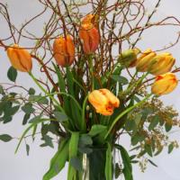 französische Tulpen mit großem Blütenkopf
