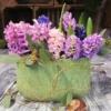 rosa und blaue Hyazinthen als Frühlingsdekoration in grünem Gefäß gestaltet
