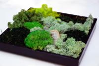 Moosbilder, eine Landschaft aus Kugelmoos, Islandmoos, Flachmoos mit Baumpilz gestaltet in schwarz lackiertem Rahmen