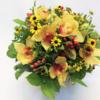 Blumenstrauß rund gebunden mit gelben Orchideen und Hypericum